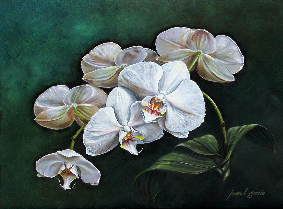Orchid Painting - White Orchids by Joan Garcia