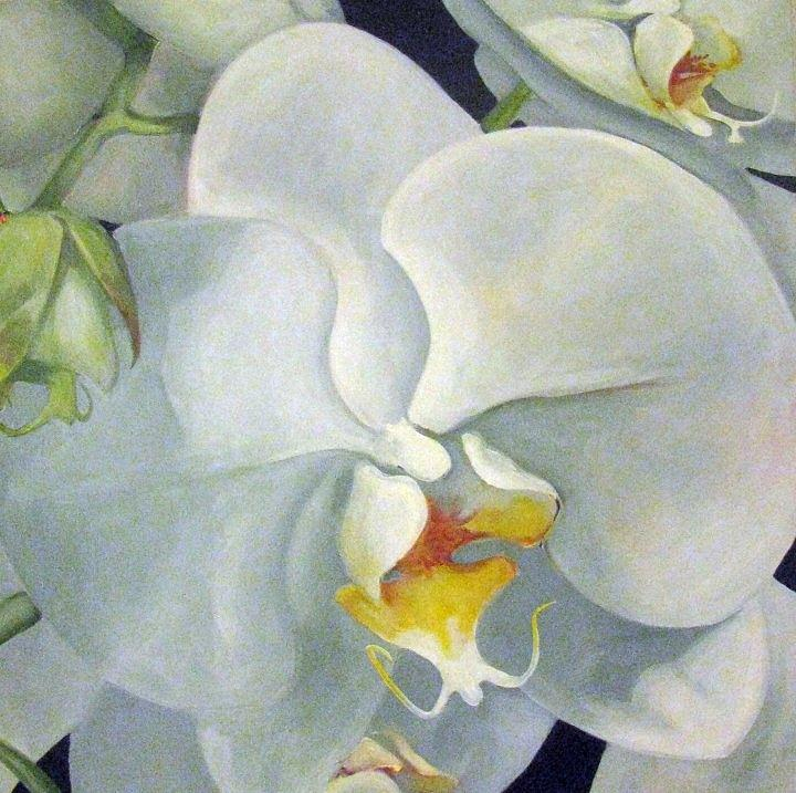 Orchids Painting - White Orchids by Luciana Toma