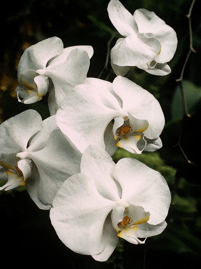 Flora Photograph - White Orchids by Tony Ramos