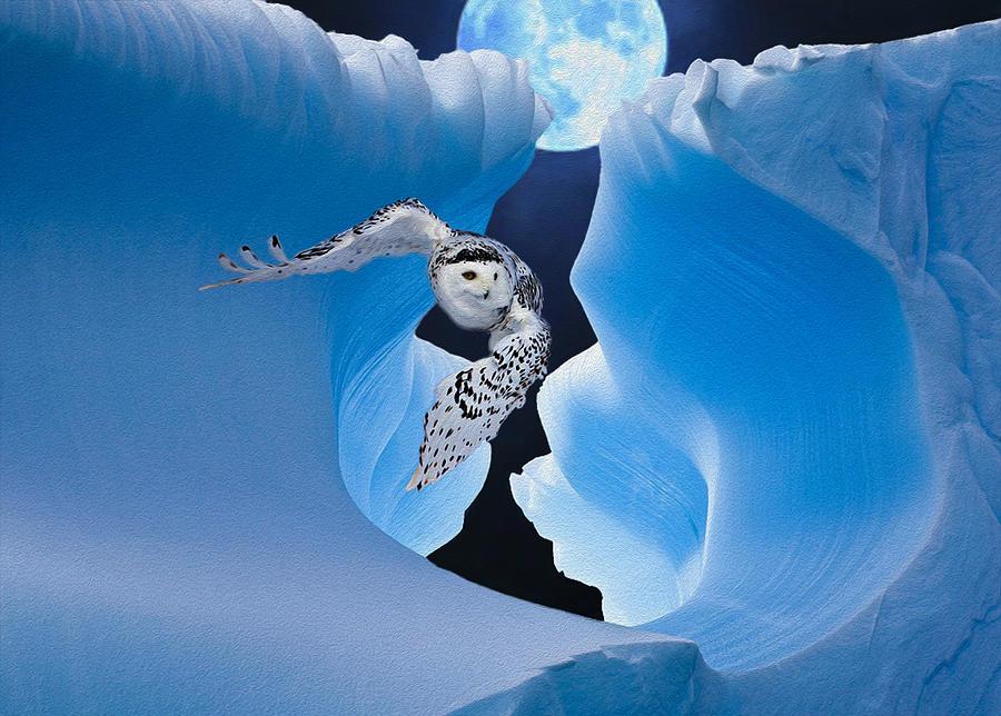 Owl Photograph - White Owl by Jack Zulli