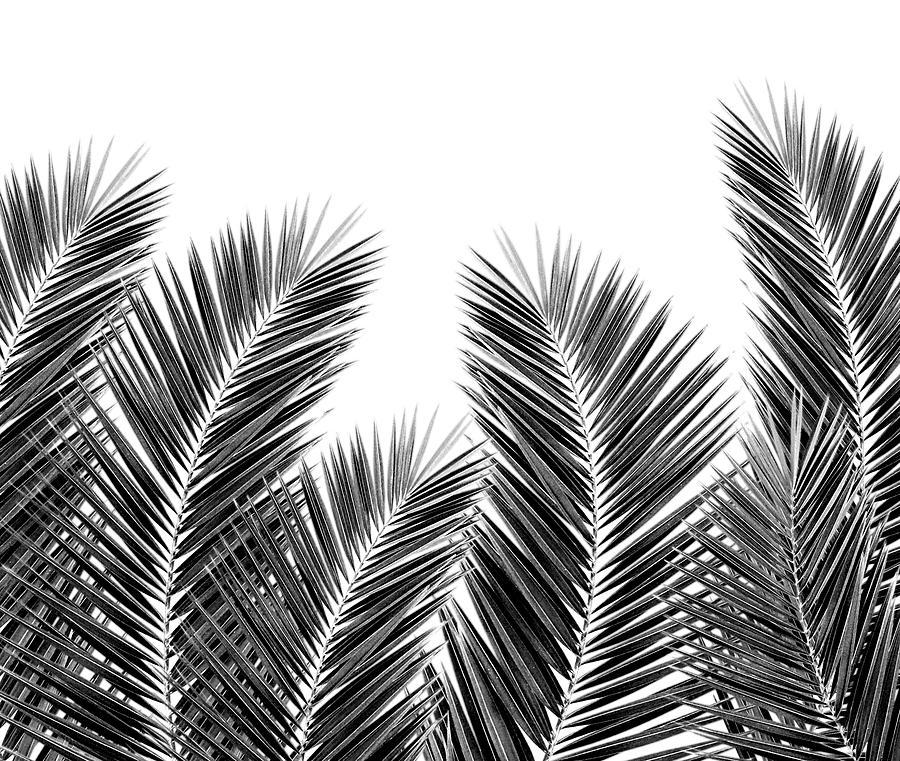 White Palm Skies Digital Art