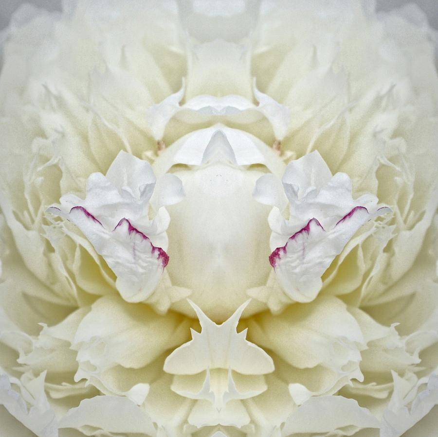 White Peony I Photograph