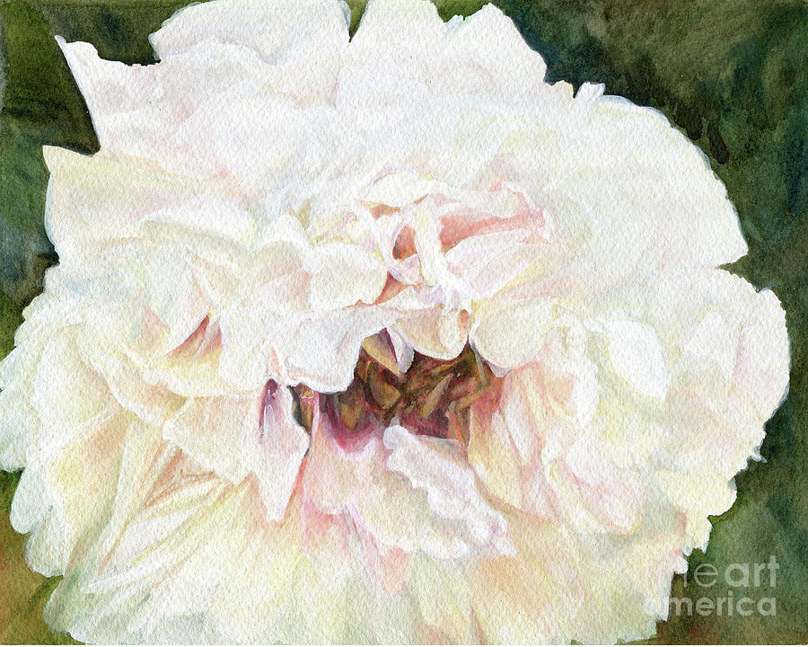 White Peony by Laurie Rohner