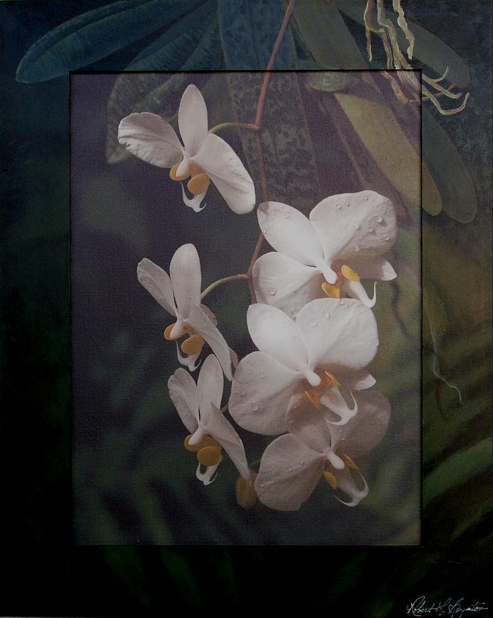 Orchid Mixed Media - White Phale by Robert Boynton