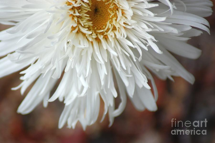 White Pure Flower by DONNA BENTLEY