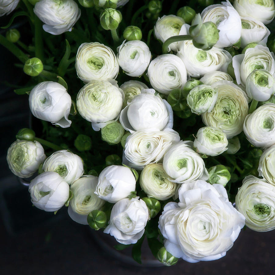 White Ranunculus Flowers In A Vase Photograph By Elena Rostunova