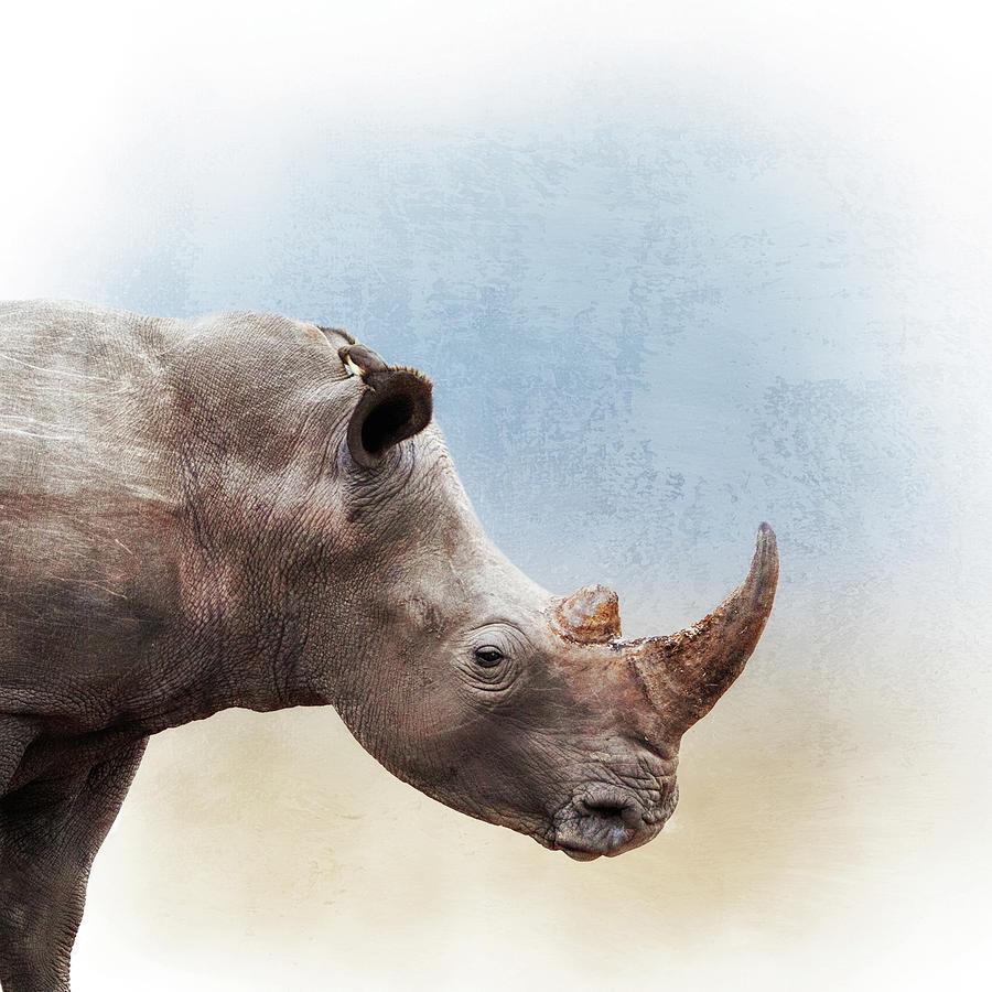 Animal Photograph - White Rhino Closeup Square by Susan Schmitz