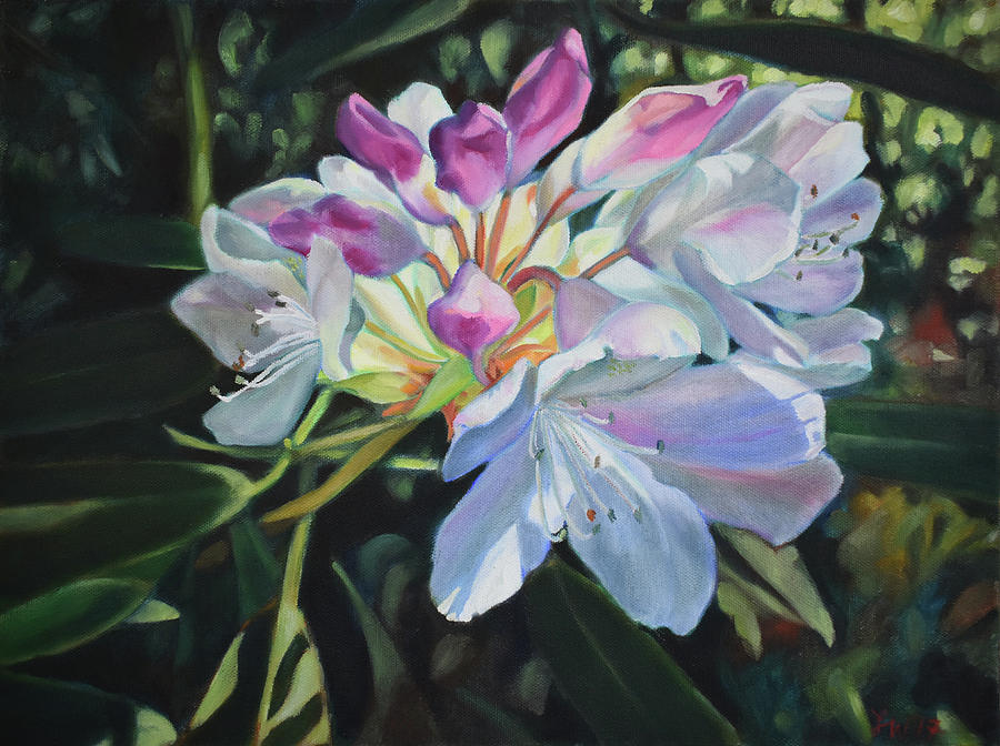 Rhododendron Painting - White Rhododendron by Lauren Waterworth