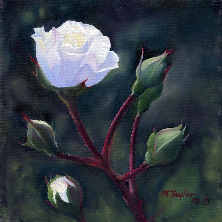 White Rose Painting By Michael Taylor