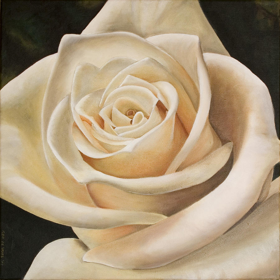 Flower Painting - White Rose by Rob De Vries