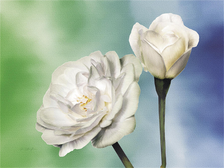 Rose Painting - White Roses by Jan Baughman