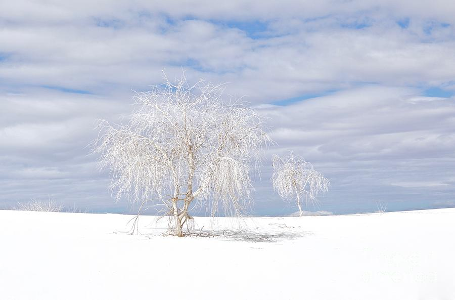 White Photograph - White Sands Duo by Glennis Siverson