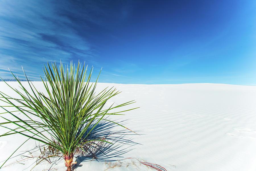 White Sands Hill by Sonja Quintero