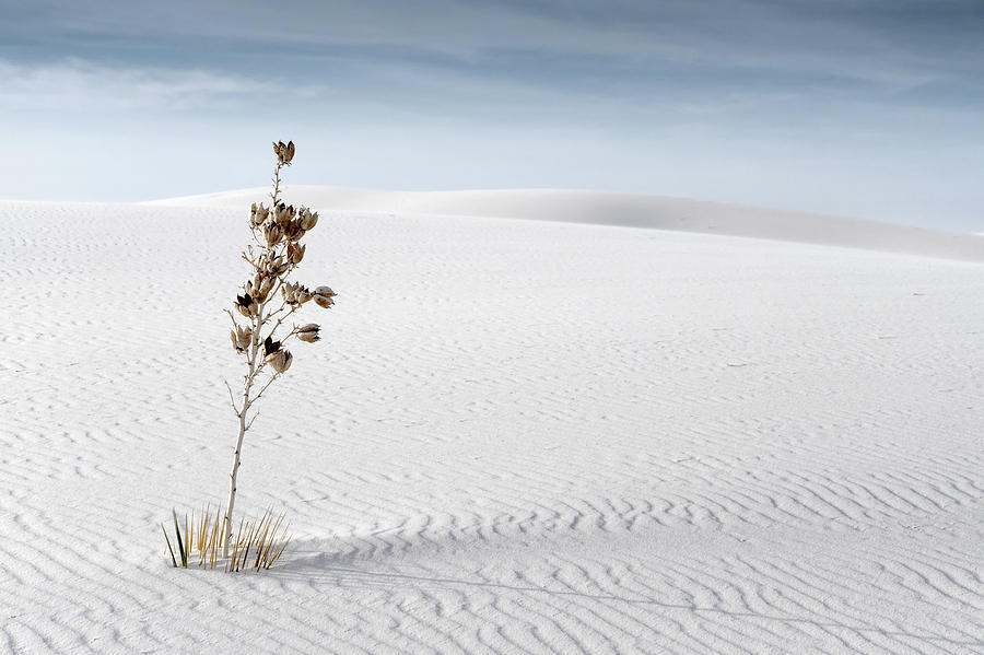 White Sands by Mike Irwin
