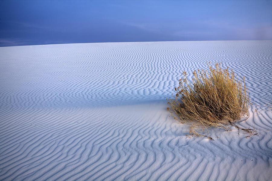 Desert Photograph - White Sands Scrub by Peter Tellone
