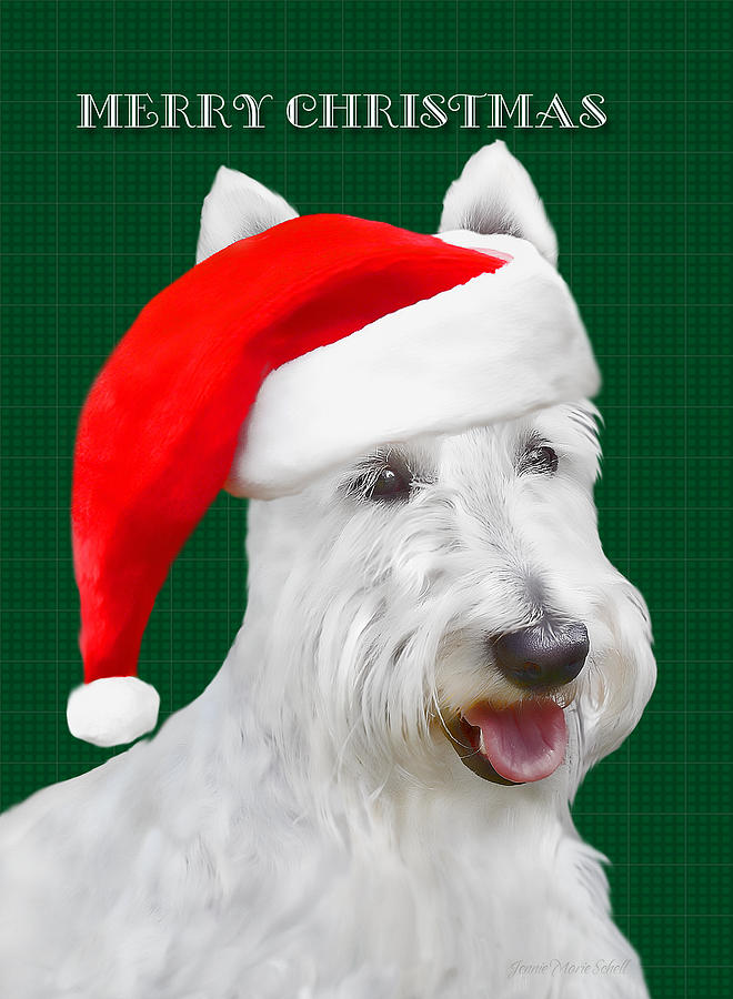Scottish Terrier Photograph - White Scottish Terrier Christmas Plaid by Jennie Marie Schell