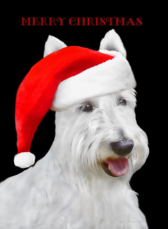 Scottish Terrier Photograph - White Scottish Terrier Dog Christmas Card by Jennie Marie Schell