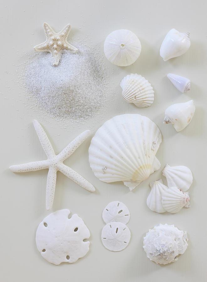 Vertical Photograph - White Shells by Daniel Hurst Photography