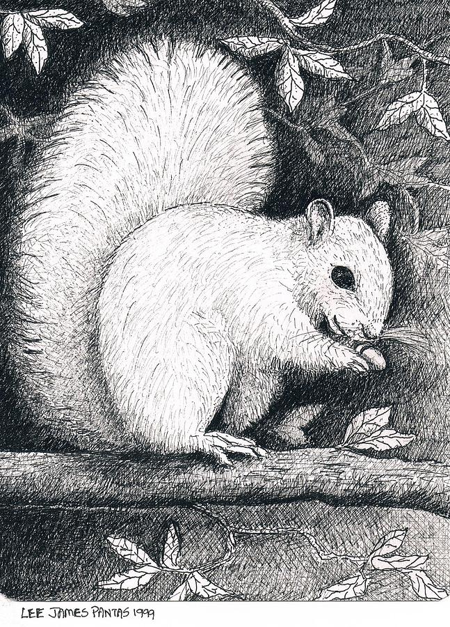 Squirrel Drawing - White Squirrel by Lee Pantas