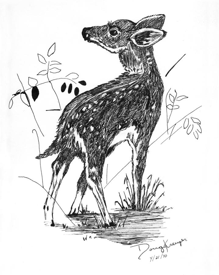 fawn drawing white tail fawn pen and ink by doug kreuger