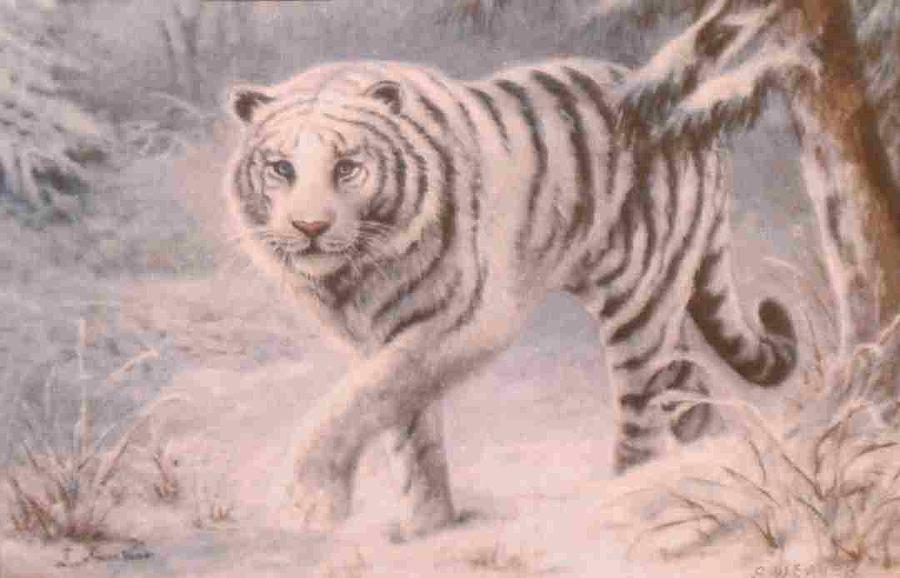 Animal Portrait Painting - White Tiger by Sharon Weaver