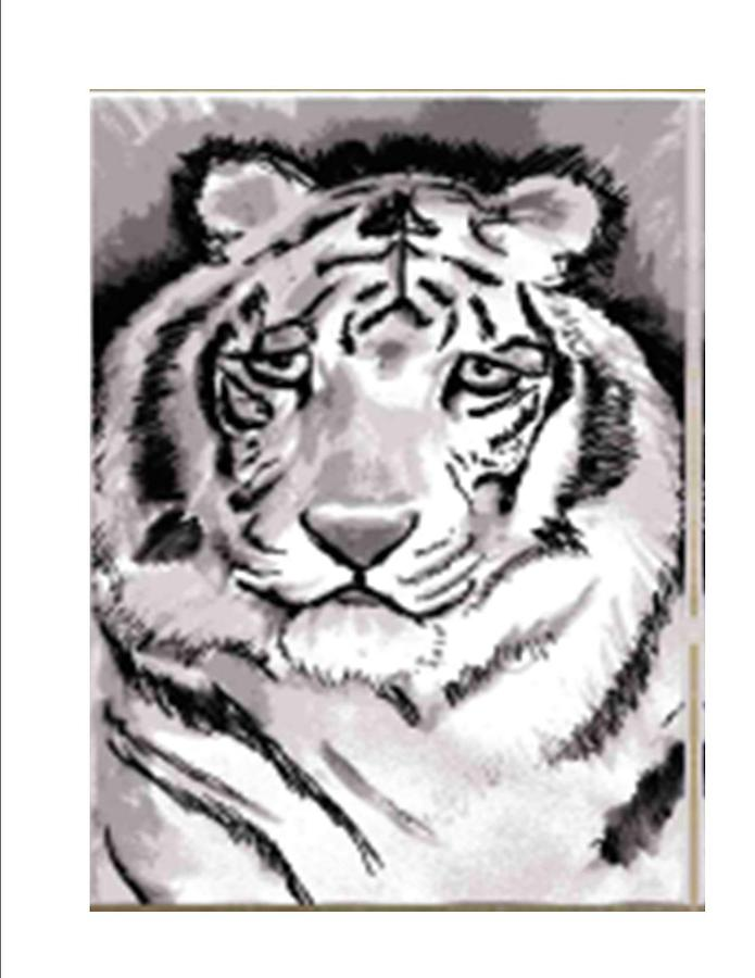 Pen And Ink Drawing - White Tiger by Terry Groehler