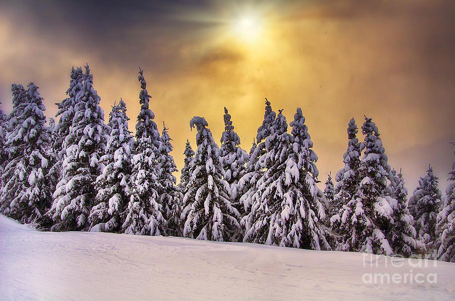 White Photograph - White trees by Alessandro Giorgi Art Photography