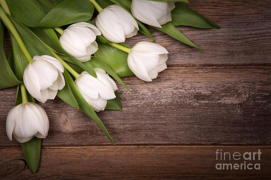 White Photograph - White Tulips by Jane Rix