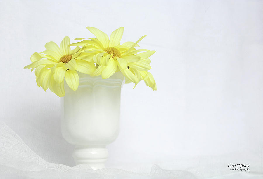 Daisies Photograph - White Vase With Yellow Daisies by Terri Tiffany