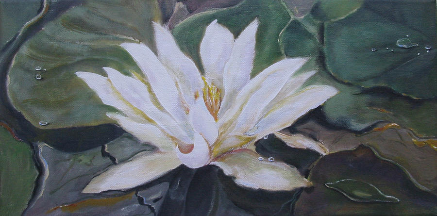 Pond Painting - White Water Lily by Eve Corin