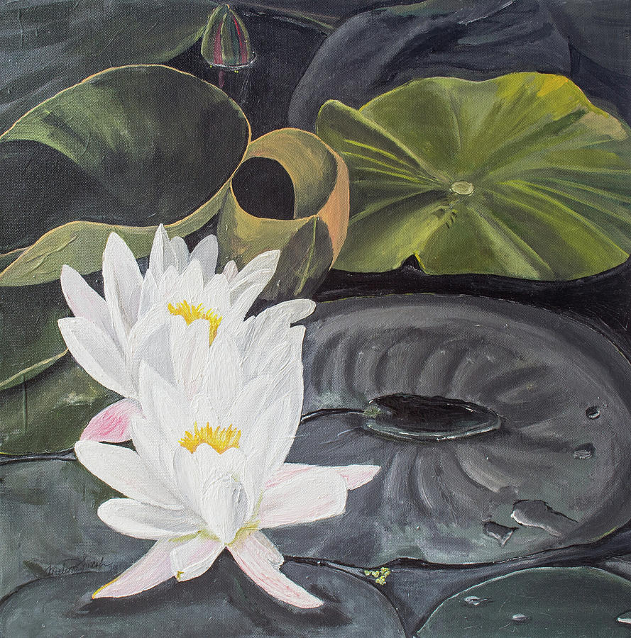 White Waterlillies by MKD Lincoln