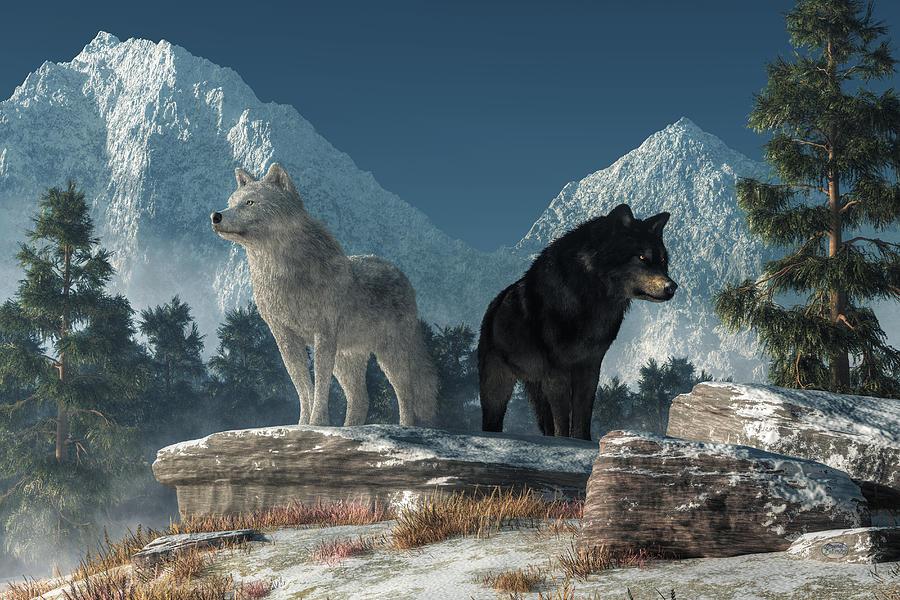 .: Black Tears :. by WhiteSpiritWolf on DeviantArt |White Wolf And Black Wolf Art