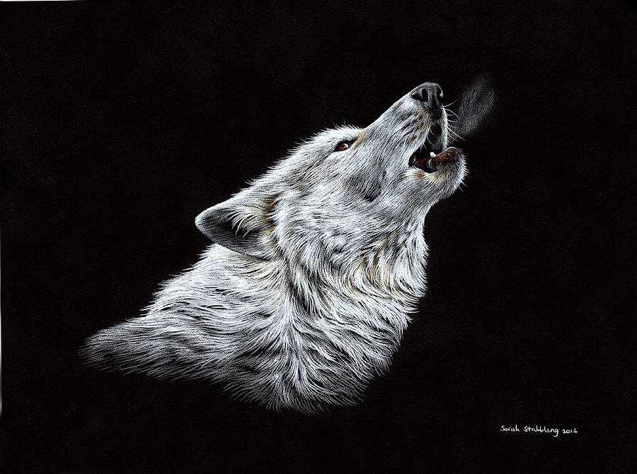 Black Wolf Howling Drawing White Wolf Howl...