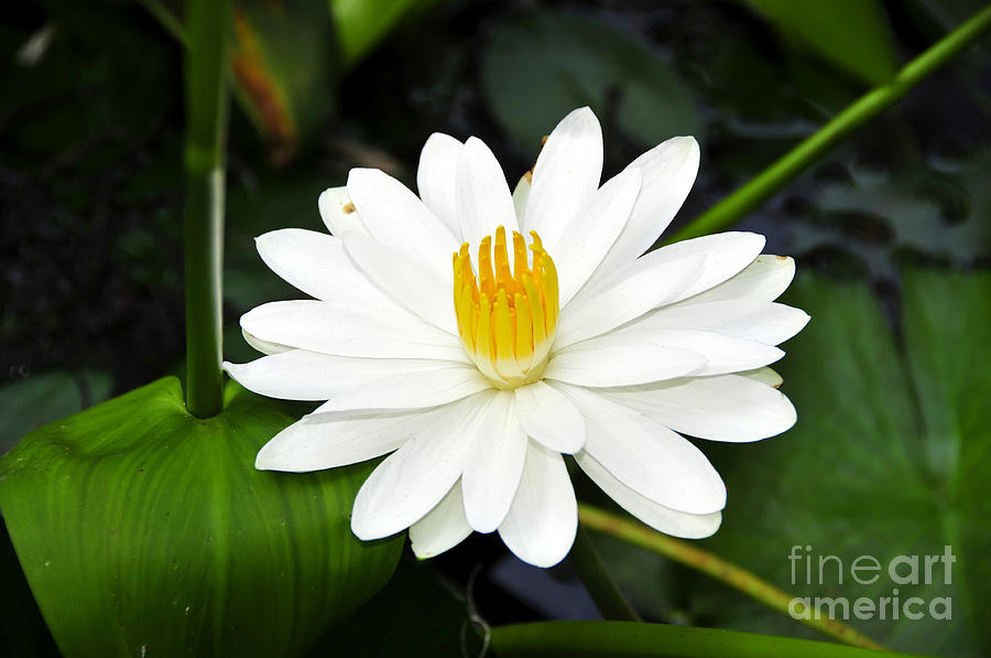 White Photograph - White Wonder by David Lee Thompson
