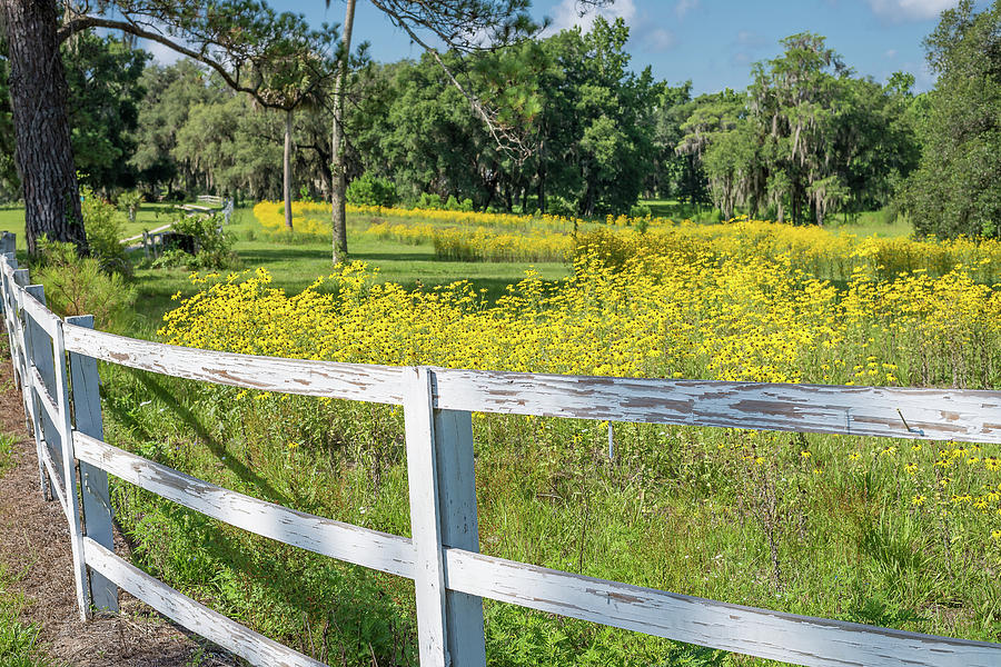 Florida Photograph - White Wood Fence And Wildflowers by Bryan Pridgeon
