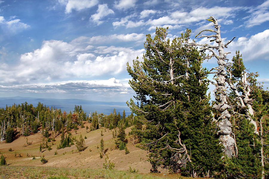 Pines Photograph - Whitebark Pine Trees Overlooking Crater Lake - Oregon by Christine Till