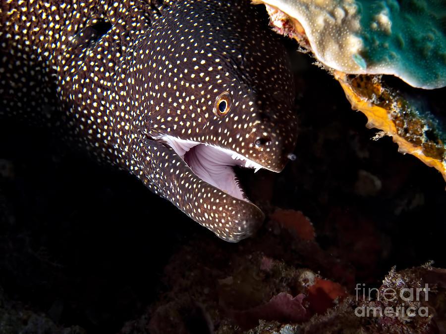 Animals Photograph - Whitemouth Moray Eel by Joerg Lingnau