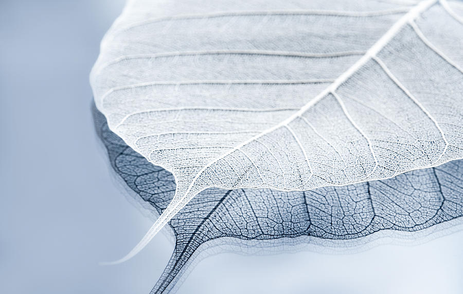 Leaves Photograph - Whiter Shade Of Pale by Maggie Terlecki