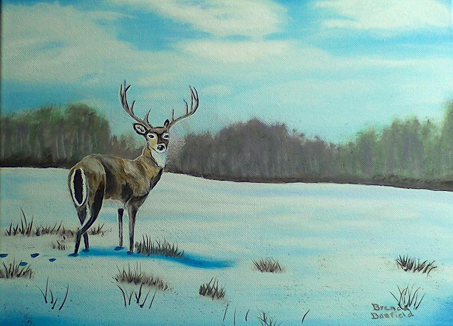 Whitetail Buck by Brenda Bonfield