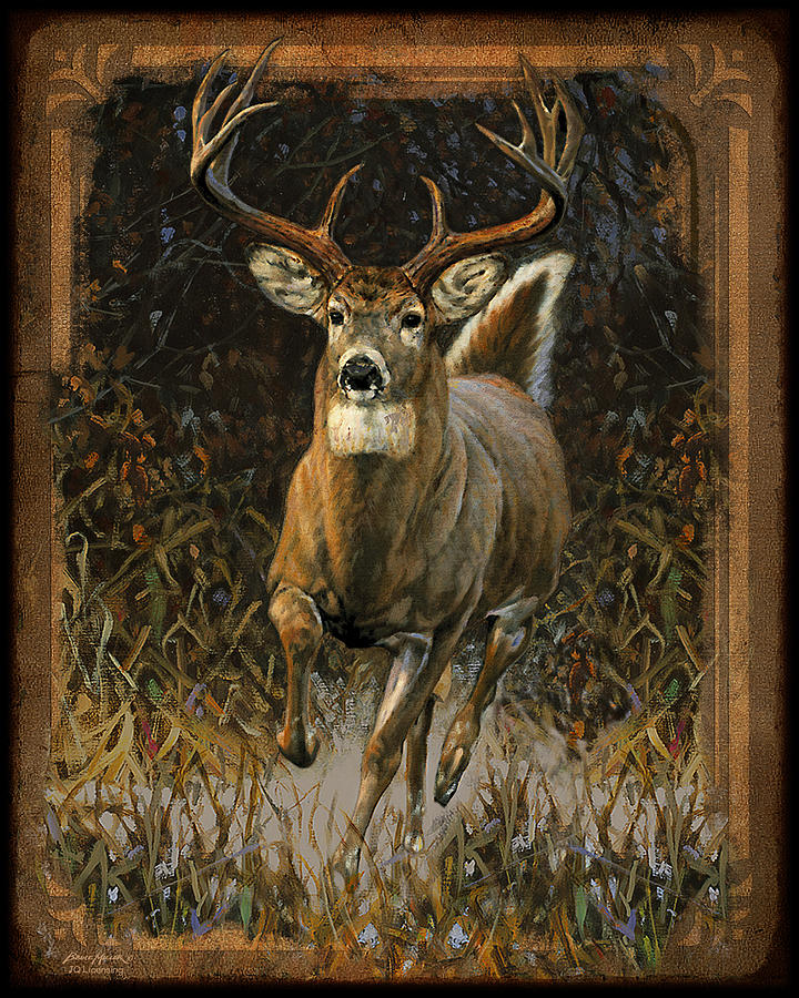 Bruce Miller Painting - Whitetail Deer by JQ Licensing