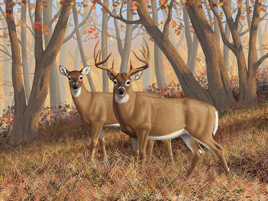 Deers Painting - Whitetail Deer Painting - Fall Flame by Crista Forest