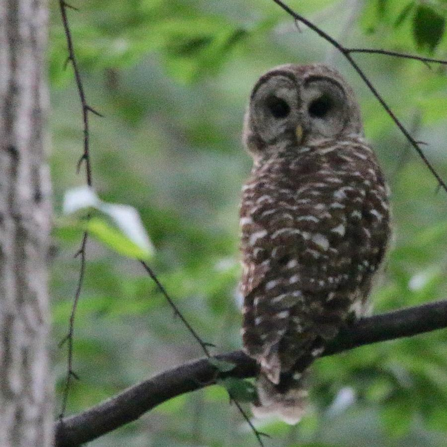 Owl Photograph - Who? by Bill Helman