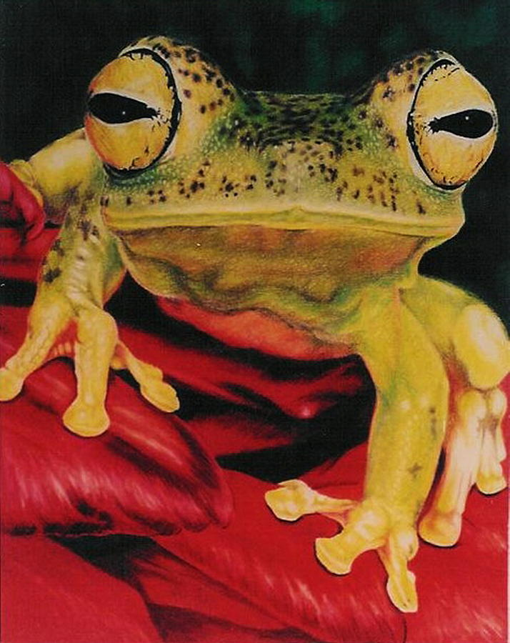 Frog Drawing - Who Loves Ya by Barbara Keith
