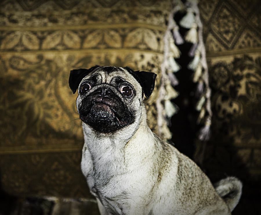 Dog Photograph - Who me? by Ryan Smith
