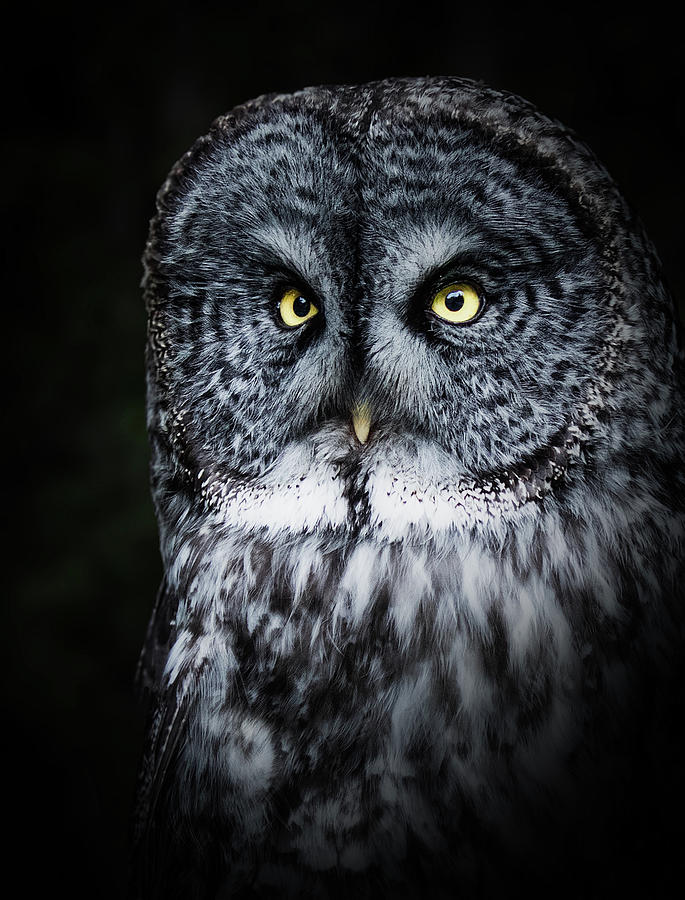 Whooo are you looking at? by Bruce Bonnett