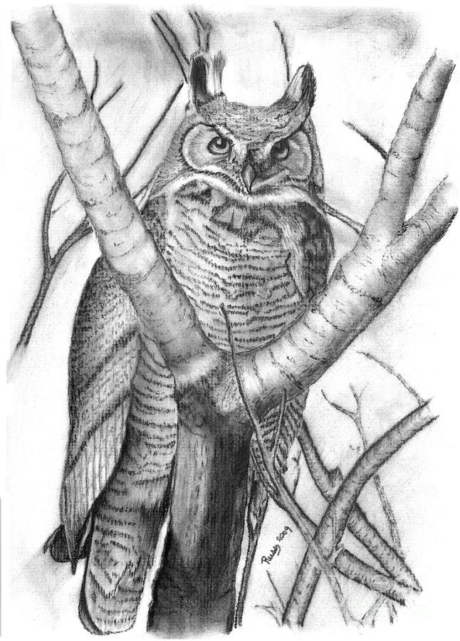 Bird Drawing - Whooo by Russ  Smith