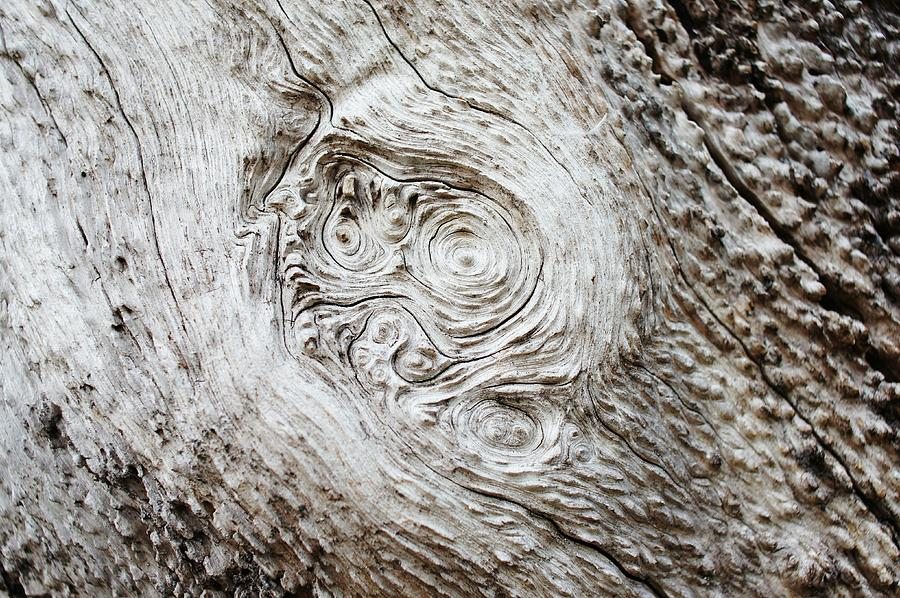 Whorl Photograph - Whorly Wood by Lynda Dawson-Youngclaus