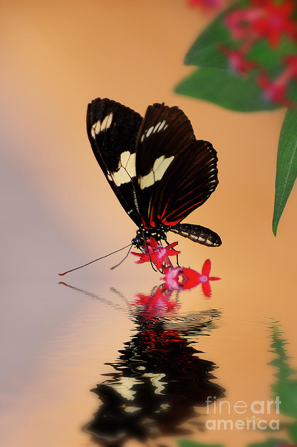 Butterfly Photograph - Whos A Pretty Boy by Lois Bryan