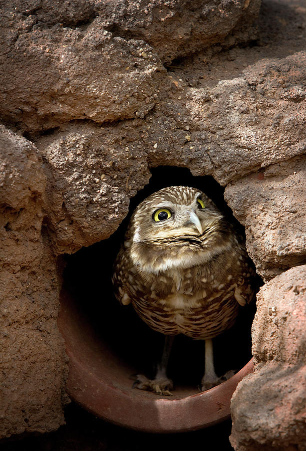 Owl Photograph - Whos There by Phyllis Denton