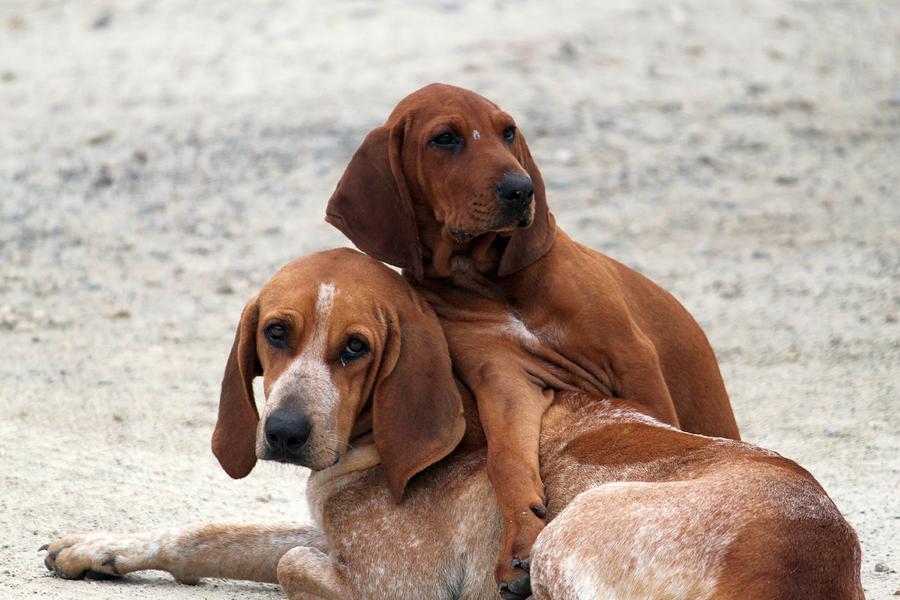 Dogs Photograph - Whos Ya Buddy by Mike Farmer